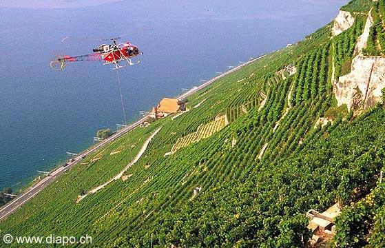 176 - Vendanges en hélicoptère