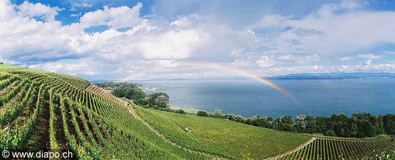 194 - Cortaillod et le lac de Neuchâtel.