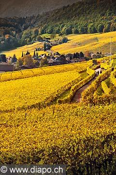 10431 - Photo : vignoble du Landeron dans le canton de Neuchâtel