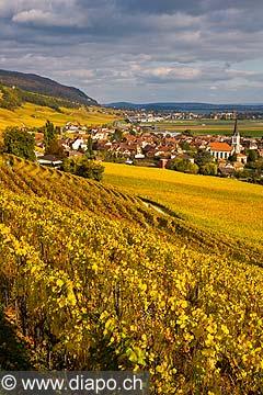 10438 - Photo :Cressier et le vignoble du Landeron dans le canton de Neuchâtel