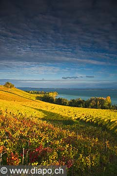 10446 - Photo :la Pointe-du-Grin et le vignoble de Cortaillod dans le canton de Neuchâtel et son lac