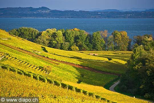10447 - Photo :la Pointe-du-Grin et le vignoble de Cortaillod dans le canton de Neuchâtel et son lac