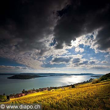 10450 - Photo : le vignoble de Ligerz dans le canton de Berne et le lac bienne avec l'île de Saint-Pierre
