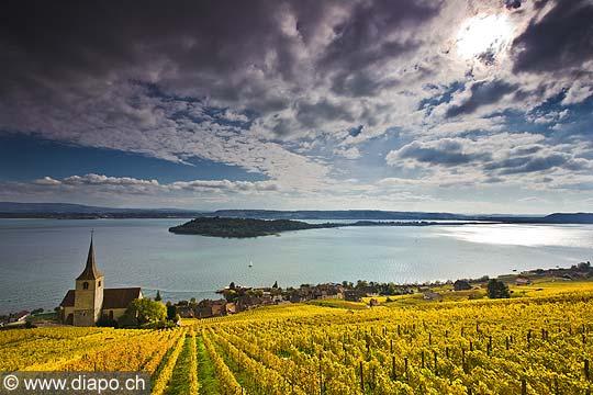 10452 - Photo : le vignoble de Ligerz avec son église dans le canton de Berne et le lac bienne avec l'île de Saint-Pierre