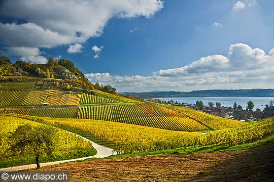 10455 - Photo : le vignoble du Vully Fribourgeois et le lac de Morat
