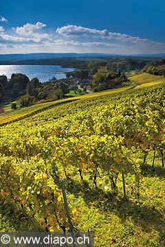 10458 - Photo : le vignoble du Vully Vaudois, sentier viticole de Vallamand et le lac de Morat
