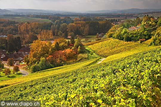 10459 - Photo : le vignoble du Vully Vaudois, sentier viticole de Vallamand et le lac de Morat
