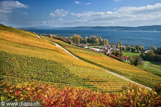 10461 - Photo : le vignoble du Vully Vaudois, sentier viticole de Vallamand et le lac de Morat
