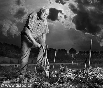 10495 - DOMAINE DU MANOIR, la plantation