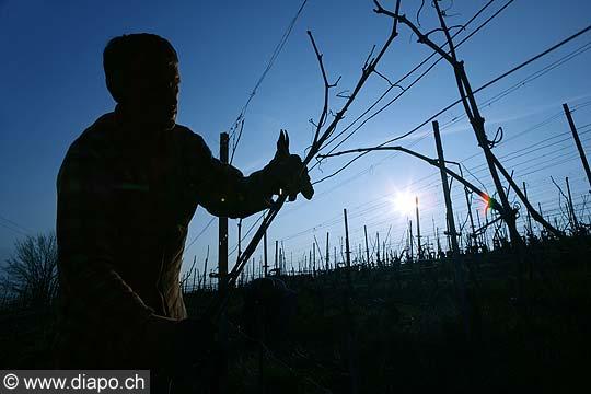 10510 - Photo: travaux de la vigne, la taille