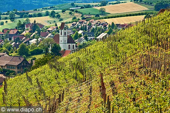 13198 - Photo Maisprach Bâle-Campagne Suisse, alémanique, vignoble, vin, wein, wines