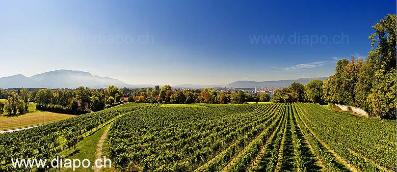 13593 - Vignoble de Genève - panorama