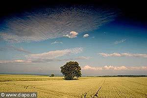 3067 - L'orge destiné au fourrage du bétail, sert également à la fabrication du malt, de la bière et de la vodka.Ici au pied du Jura, ce champ d'orge fera certainement place à du colza l'année suivante.