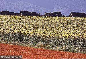 3075 - Le canton de Vaud représente à lui seul le 10 % de la surface agricole de la Suisse. Sur cet espace, les paysans, produisent le quart des céréales, des betteraves et des oléagineux ( colza, soja et tournesol) du pays.