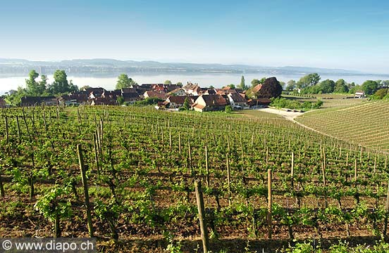4494 - Vully Fribourgeois
