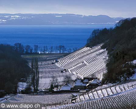8366 - Photo : Cortaillod et le lac de Neuchâtel