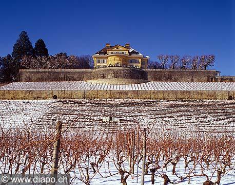 8367 - Photo : vignoble vers Neuchâtel en hiver