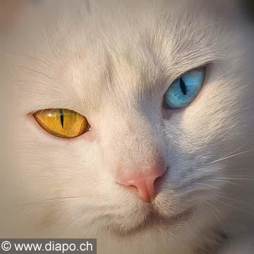 9912 - Photo : regarde de chat