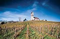 154 - Hallau, le plus grand vignoble d'un seul tenant de Suisse orientale(SH).