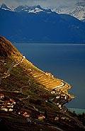 166 - rai de lumière sur Lavaux en hiver
