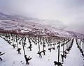 184 - Lavaux en hiver