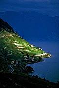 193 - Photo : Suisse, canton de Vaud, vignoble de Lavaux, et le Lac Léman - UNESCO