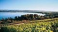 225 - Photo : Lac de Morat, la partie vaudoise du Vully, à Vallamand-Dessus