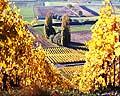 372 - Photo : Suisse - Canton de Vaud -  vignoble de La Côte vers Féchy