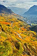 10365 - Photo: Suisse, vignoble du Valais, Sion, switzerland, swiss wines - wein, schweiz