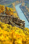 10368 - Photo: Suisse, vignoble du Valais, Sion, switzerland, swiss wines - wein, schweiz