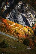 10371 - Photo: Suisse, vignoble du Valais, switzerland, swiss wines - wein, schweiz