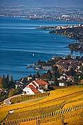 10394 - Photo : Suisse, canton de Vaud, Montagny, vignoble de Lavaux en terrasses en direction de Lausanne et le Lac Léman