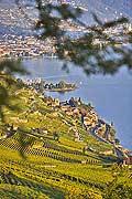 10397 - Photo : Suisse, canton de Vaud, Montagny, vignoble de Lavaux en terrasses en direction de Vevey et le Lac Léman