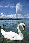 10403 - Photo : Suisse - ville de Genève - jet d'eau - lac Léman - Geneva, , switzerland