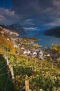 10416 - Photo - Suisse alémanique, vignoble près de Weesen dans le canton de Saint-Gall et le lac de Walensee