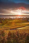 10423 - Photo - Suisse alémanique, vignoble près de Stäfa - canton d'Uri et lac de Zurich