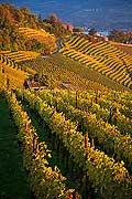 10428 - Photo - Suisse alémanique, vignoble près de Stäfa - canton d'Uri et lac de Zurich