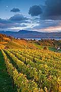 10429 - Photo - Suisse alémanique, vignoble près de Stäfa - canton d'Uri et lac de Zurich