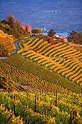 10430 - Photo - Suisse alémanique, vignoble près de Stäfa - canton d'Uri et lac de Zurich