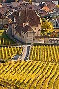 10434 - Photo : vignoble du Landeron dans le canton de Neuchâtel - Château de Cressier