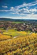 10437 - Photo :Cressier et le vignoble du Landeron dans le canton de Neuchâtel