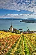 10451 - Photo : le vignoble de Ligerz avec son église dans le canton de Berne et le lac bienne avec l'île de Saint-Pierre