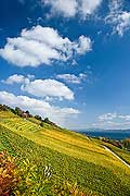 10460 - Photo : le vignoble du Vully Vaudois, sentier viticole de Vallamand et le lac de Morat