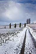 10484 - Photo : Suisse, vignoble de Genève sous la neige vers Bourdigny  - Geneva, switzerland, swiss wines - wein, schweiz