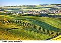 10533 - Photo: Suisse, Vaud,  vignoble d'Arnex-sur-Orbe dans les Côtes de l'Orbe