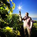 10902 - Daniel Rey, Il avoue aimer de plus en plus la viticulture et de moins en moins les affaires.