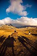 10954 - Photo : Islande, terre de glace
