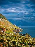 10974 - Photo : Suisse, canton de Vaud, vignoble de Lavaux, et le Lac Léman - UNESCO
