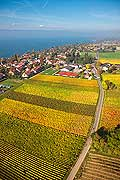 10985 - Photo : Suisse, vignoble à Anière -  Genève - Geneva, switzerland, swiss wines - wein, schweiz