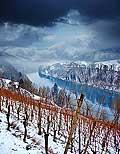 10990 - Photo - Suisse alémanique, Les vignes surplombent Eglisau (Zurich) et le Rhin
